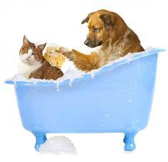 Trucos para limpiar a tu mascota después de una visita al charco de la esquina ;)