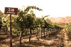 Our Zinfandel Vineyard at Vintage Cowboy Winery