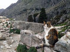 Montenegro, Cats, Animals, Gatos, Animales, Animaux, Animal, Cat, Animais