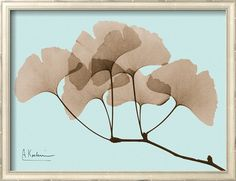 Ginkgo Leaves Brown on Blue Print by Albert Koetsier at AllPosters.com