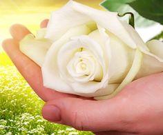 CHR Servicios Funerarios rosa blanca sostenida en mano