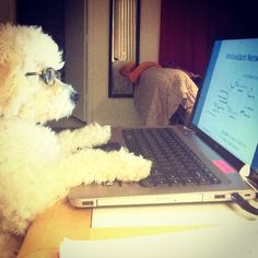 This pup probably types faster than we do. ;)