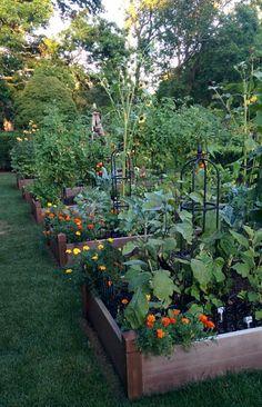 Backyard Vegetable Gardens, Veg Garden, Garden Cottage, Garden Beds, Home Vegetable Garden Design, Vegetable Garden Layouts, Vegetable Garden Planning, Farm Gardens, Outdoor Gardens