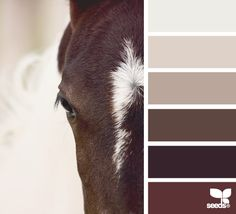 not sure why its called horse palette but i like it - living room with lighter walls and darker furniture or bedroom with darker walls and lighter furniture/ accents