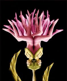 Cecelia Webber: Los Angeles based artist, she creates flower and butterfly assemblages from hundreds of nude human form photographs. Cecelia's photographic compositions can take up to two months to produce due to the complexity of finding the right pieces. The result is lovely.
