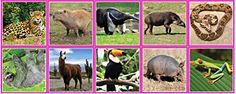 Монтессори-материал. Карточки южно-американских животных