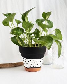 Tan and Black Terra Cotta Pot — Franky and J. Painted Plant Pots, Painted Flower Pots, Indoor Planters, Diy Planters, Indoor Flower Pots, Tall Planters, Modern Planters, Concrete Planters, Flower Planters