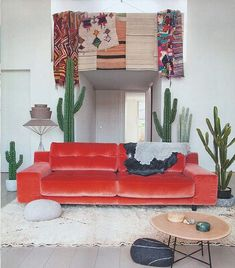 red and cacti