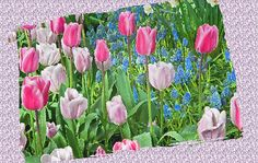 Abstract Spring Floral Fine Art Print Fine art print & greeting cards