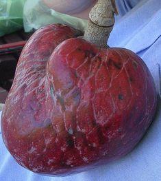 Zuurzak of wilde guanabana... lijkt op een hart, en dan is 't meestal ook goed ervoor.