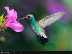 kolibri zuk nftige projekte pinterest kolibris. Black Bedroom Furniture Sets. Home Design Ideas