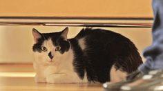 ネコも楽しめるネコ番組!?ネコの目線で世界の街角のネコを撮影!動物写真家・岩合光昭さんが写す愛らしいネコの表情を満喫してください。岩合さんは「ネコは人間とともに世界に広まった。だからその土地のネコはその土地の人間に似る!」と言います。どんな土地でどんなネコの表情が登場するか、お楽しみに。