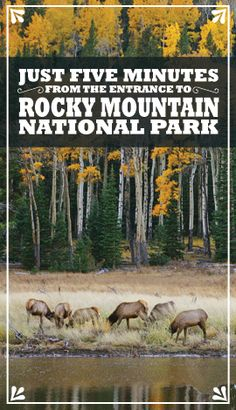 Manor RV Park, Estes Park, Colorado.  Just 5 Minutes to Rocky Mountain National Park (RMNP).