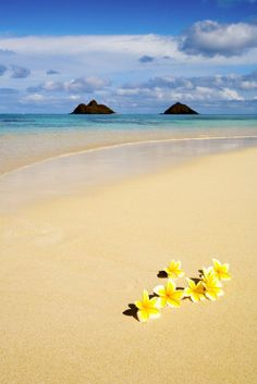 Plumerias on the Sand, Oahu, Hawaii. See you soon Hawaii! Aloha Hawaii, Hawaii Travel, Dream Vacations, Vacation Spots, Wyoming, Hampshire, Places To Travel, Places To See, Iowa