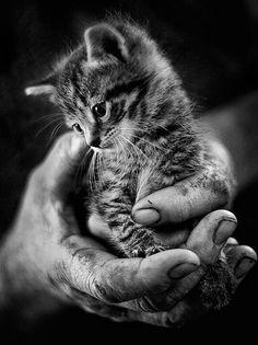 TOP 44 Katzenbilder - My list of best tattoo models Kittens And Puppies, Cute Cats And Kittens, Baby Cats, Kittens Cutest, Baby Kitty, Ragdoll Kittens, Sleepy Kitty, Pretty Cats, Beautiful Cats