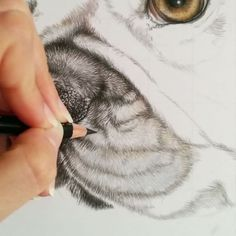 Draw fur | Fell zeichnen French Bulldog, in colour pencils Französische Bulldogge, in Buntstift *-*-*-*-*-*-*-*-* #französischebulldogge #französischebulldoggen #frenchbulldog #frenchbully #colouredpencils #colorpencil #cp_art #art_4share #artdiscover #supportart #dogdrawing #dogart #animalportrait #petdrawing #petart #drawingvideo #drawingtutorial #realistic_artworks #realisticart #realisticdrawing #dailyarts #animalcreatives #youngartist #pencildrawing #pencilart #arts_gallery…