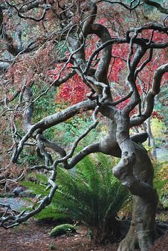 The Beauty Underneath -  Japanese Garden at Hatley Park (Royal Roads University) on Vancouver Island, British Columbia, Canada