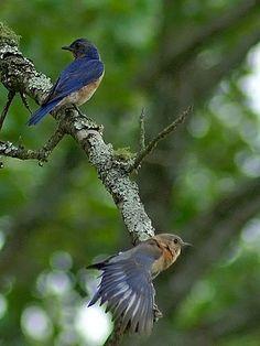 Small Birds, Colorful Birds, Love Birds, Beautiful Birds, Beautiful Gardens, Pet Birds, Kakapo Parrot, Eagle Bird, Nature Music