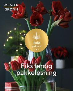 Vi har gjort det enkelt for deg og  satt sammen en ferdig pakke med juleblomster i rødt og grønt!  😍🌹 Vase, Jars, Vases, Jar