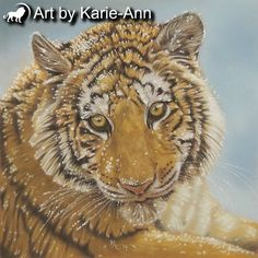 Tiger cub big cat animal wildlife nature fine art print giclee COA signed 8x8 inch image mounted ready for framing by artbykarieann