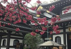Hasedera Temple in Japan