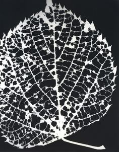 By Melissa Bear // www.melissa-bear.com // silver gelatin photographic print