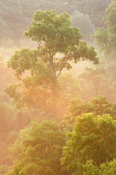 Fog, Short Hills Provincial Park Forest, St. Catherines, Ontario, Canada | Darwin Wiggett.