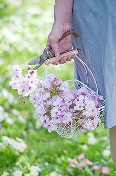 Basket of blossoms at Tregothnan by Clive Nichols