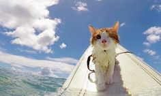 One-Eyed Kitty Swims, Surfs And Is All Around Paw-some