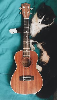 DESCRIPTION OF UKELELE: concert uke, preferably something classic, yet unique, other photos give color ideas