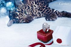 Cartier's 2012 Winter Tale Holiday Campaign Features Cubs Playing Hide & Seek & Will Pull At Your Heart Strings Jewelry Ads, Cartier Jewelry, Cat Jewelry, Jewellery, Panther Cub, Cartier Panther, Leopard Cub, Tiger Love, Winter's Tale