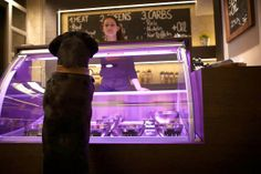 Dogs in Berlin, Germany are living the good life! A new restaurant for dogs has opened up with food of such high quality  its claimed to be fit for humans!