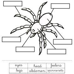 Spider Parts Worksheet