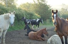 Holistic Horse Basics is the section of Happy Horse Training for anyone searching for simple, straightforward information on holistic horse care and training. It is not just about concepts and philosophy, but is the result of years of genuine experience.