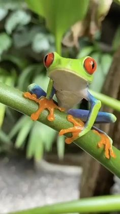 Nature Animals, Baby Animals, Funny Animals, Cute Animals, Wild Animals, Funny Frogs, Cute Frogs, Frog And Toad, A Frog