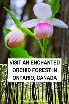 Discover an enchanted orchid forest in Ontario, Canada Canadian Travel, Canadian Rockies, Ontario Travel, Travel Guides, Travel Tips, Travel Advice, Canada Destinations, Visit Canada, Day Trips