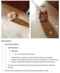 AVIAN CATS