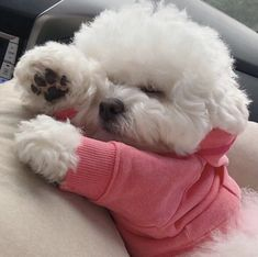 Bichon Dog, Maltese Dogs, Dogs And Puppies, Doggies, Super Cute Puppies, Cute Dogs, Cute Babies, Hypoallergenic Dog Breed, Baby Animals Pictures