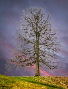 Tree of Life by Paul Byrne on 500px