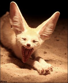 ~~Fennec Fox ~ Most terrific creature EVER??? by *woxys~~