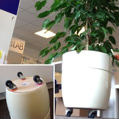 Add wheels to your heavy office plant with Sugru.