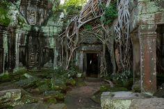 Ta-Prom, Cambodia
