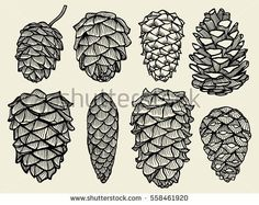Pine cones of cedar spruce fir christmas tree pine set. hand-drawn vector illustration