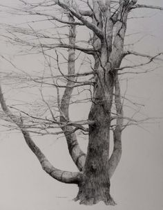 drawing of a tree-the art, dedication, time, and patience that must have went into this is astounding and I can only applaud that talent. Tree Sketches, Drawing Sketches, Pencil Drawings, Art Drawings, Landscape Drawings, Landscape Art, Academic Drawing, Art Graphique, Tree Art