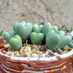 How To Use Succulent Landscape Design For Your Home Succulent Gardening, Succulent Terrarium, Cacti And Succulents, Planting Succulents, Cactus Plants, Garden Plants, Container Gardening, House Plants, Planting Flowers