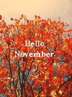 Hello November, via Flickr.