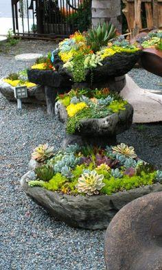 As suculentas estão cada vez mais em evidência nos jardins brasileiros e a cada dia surgem mais ideias de como cultivar estas belas esp...