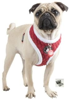 Blitzen Plush Choke-Free Quilted Halter Harness - Color Santa's Red