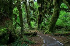 Hall of Mosses Trail at the Hoh Rain Forest in Olympic National Park