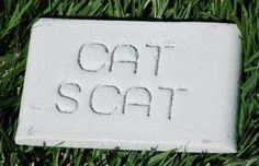 Cat Scat - Cat Deterrent Rock - A natural smell that cats do not like is emitted to keep cats away from areas in your garden or yard. Smells nice to humans though...
